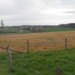 Abgetötete Grünflächen sorgen bei den Mucher BürgerInnen für Unmut; zu Recht!